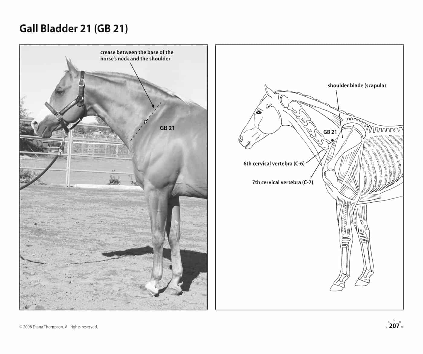 Acupressure Point Charts for Horses